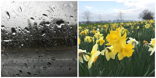 April showers and flowers_YourEducationSource.com